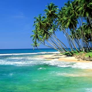 beach_sri_lanka.jpg